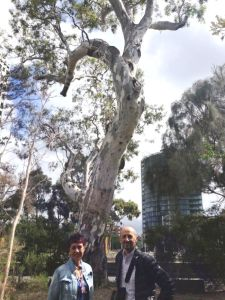 Meyer Eidelson and traditional owner Carolyn Briggs at the St Kilda Corroboree Tree